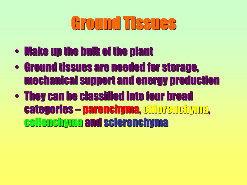 Ground Tissues