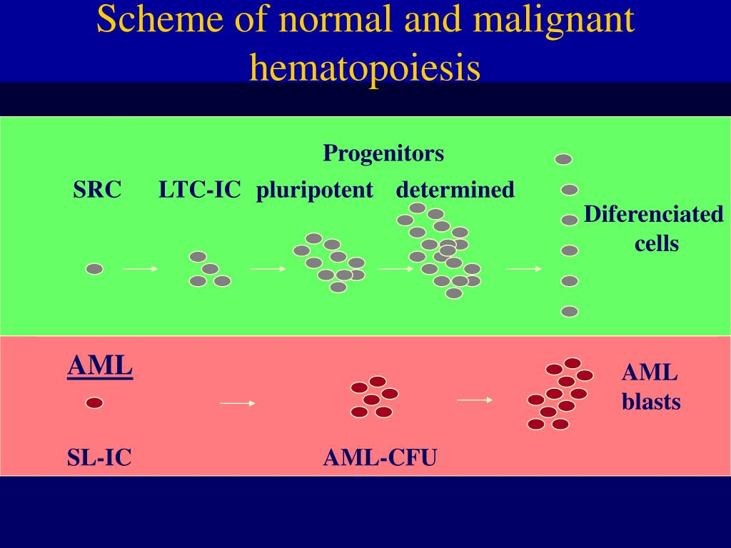 Scheme of normal and malignant hematopoiesis