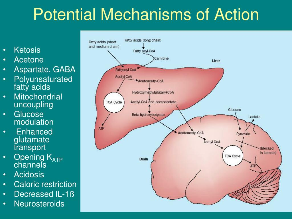 Potential Mechanisms of Action
