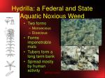hydrilla a federal and state aquatic noxious weed
