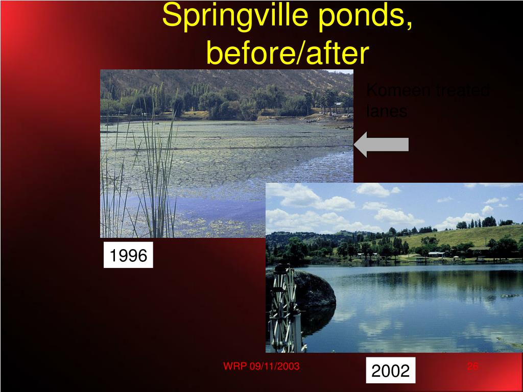 Springville ponds, before/after