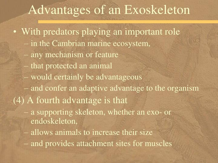 Advantages of an Exoskeleton