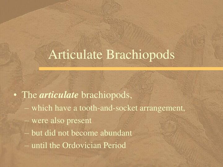 Articulate Brachiopods