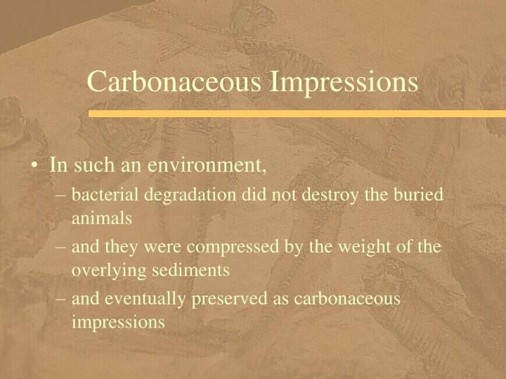 Carbonaceous Impressions
