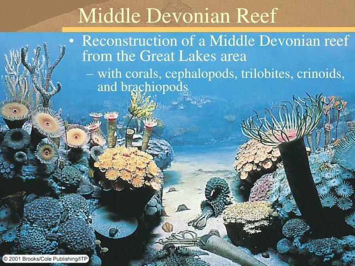 Middle Devonian Reef