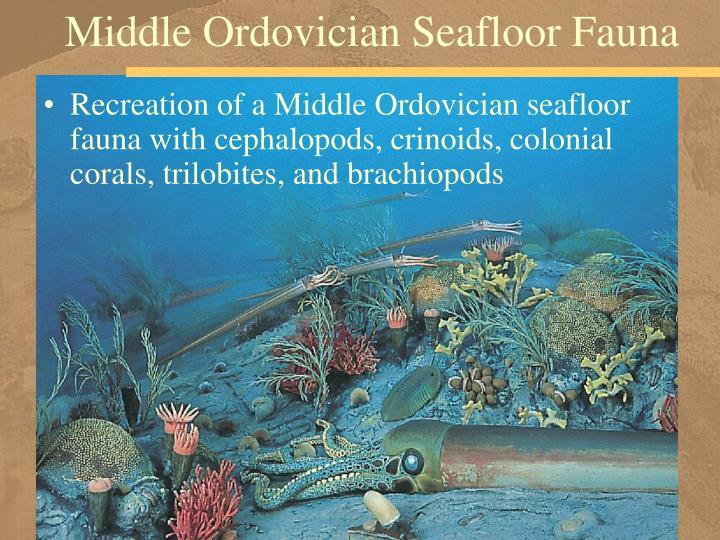 Middle Ordovician Seafloor Fauna