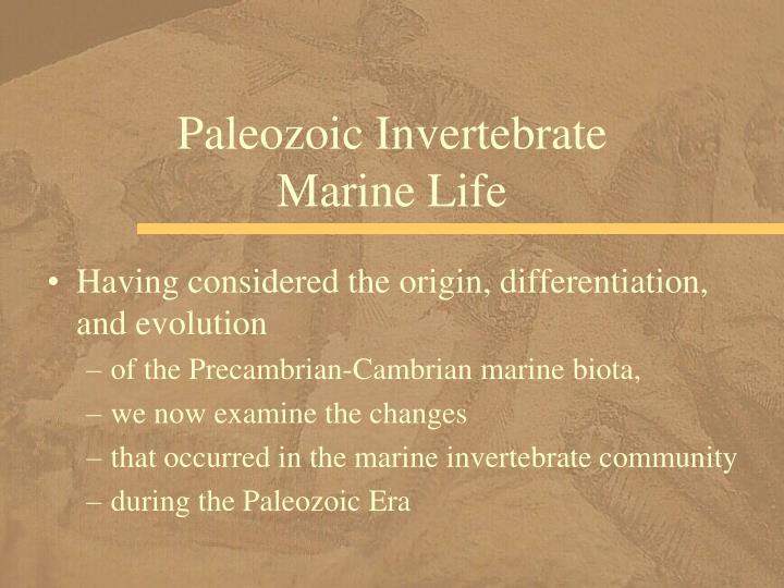 Paleozoic Invertebrate