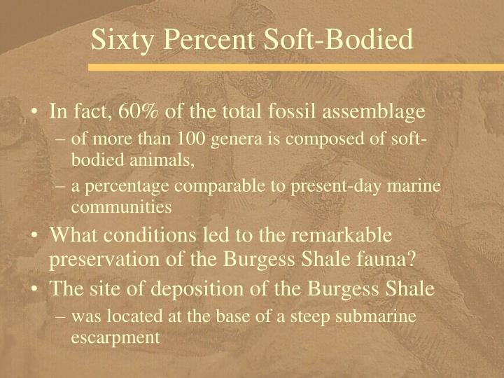 Sixty Percent Soft-Bodied