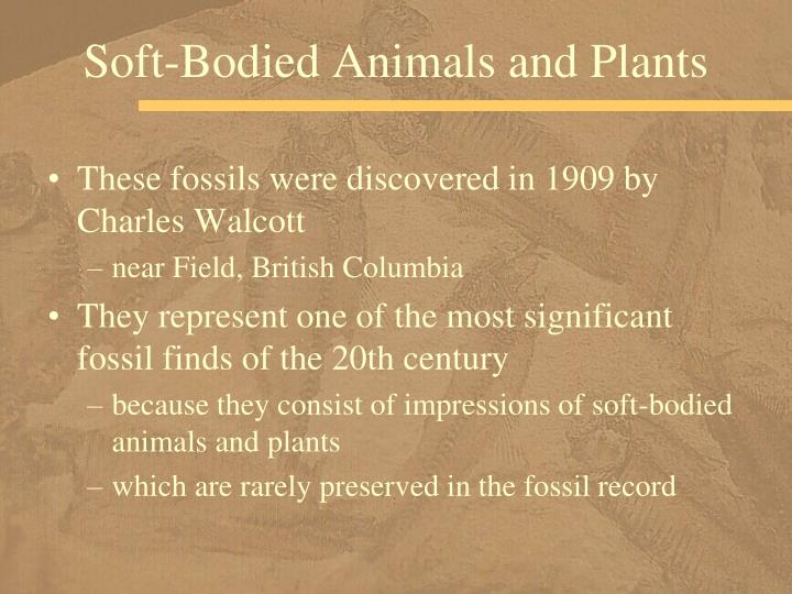 Soft-Bodied Animals and Plants