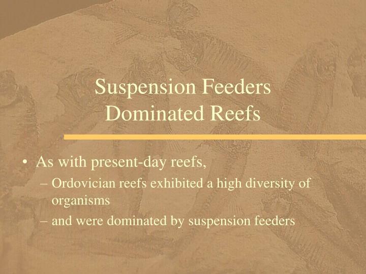 Suspension Feeders