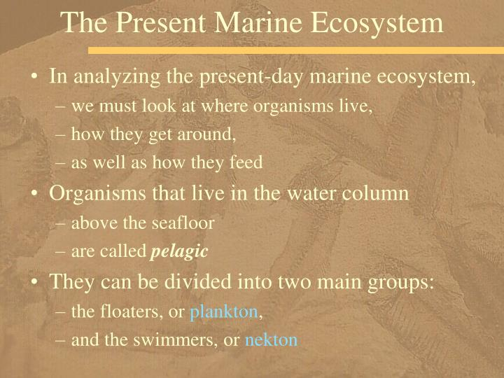 The Present Marine Ecosystem