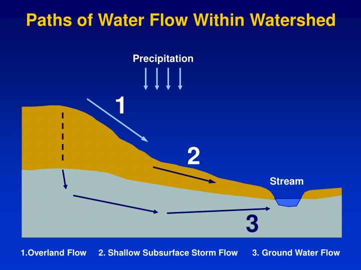 Paths of Water Flow Within Watershed