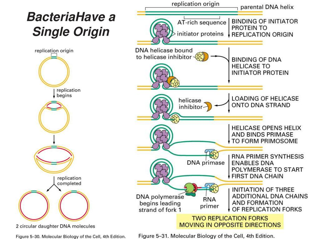 BacteriaHave a Single Origin
