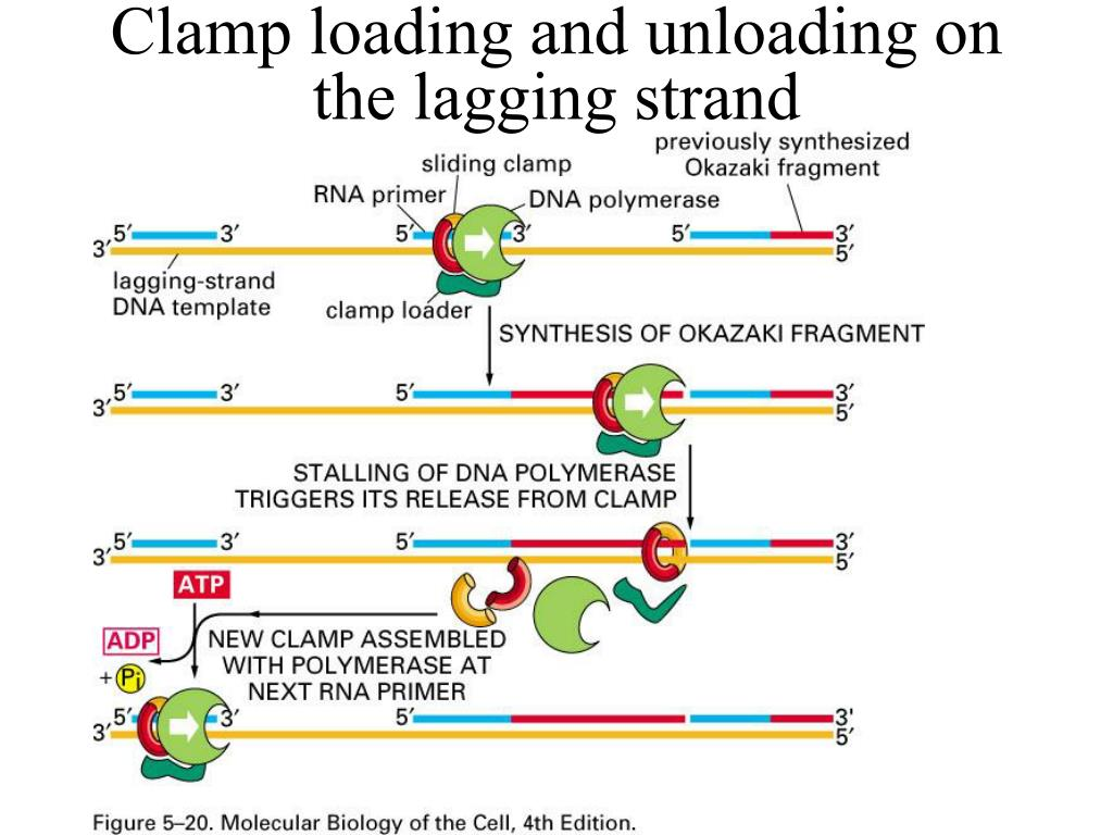 Clamp loading and unloading on the lagging strand