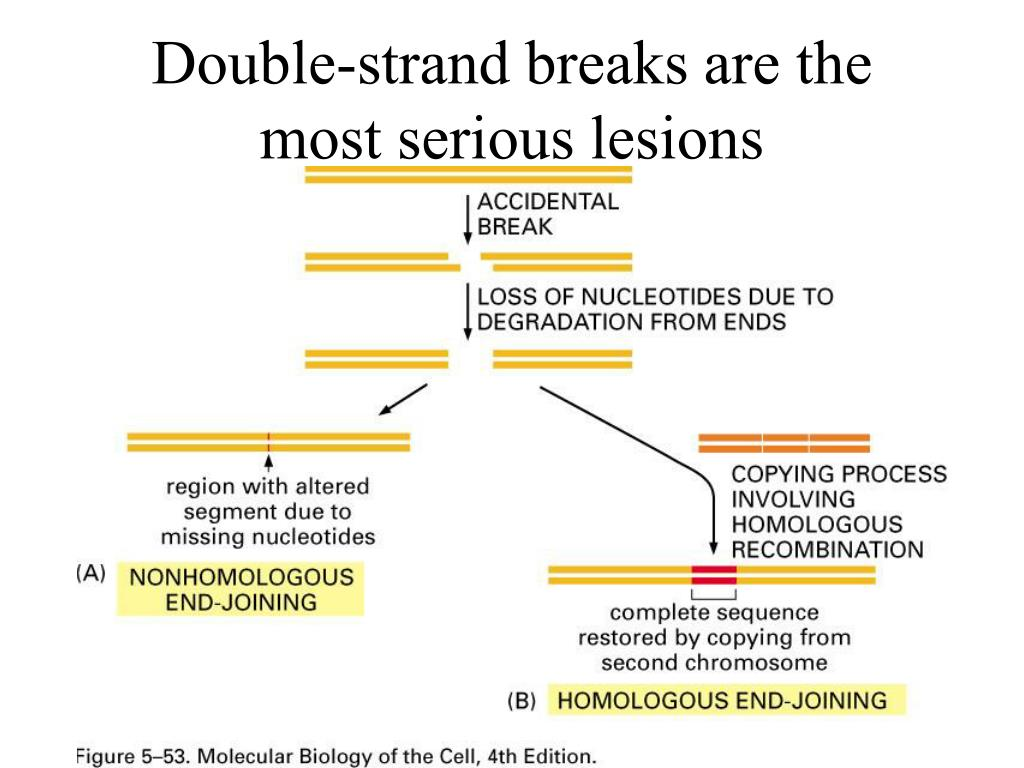 Double-strand breaks are the most serious lesions