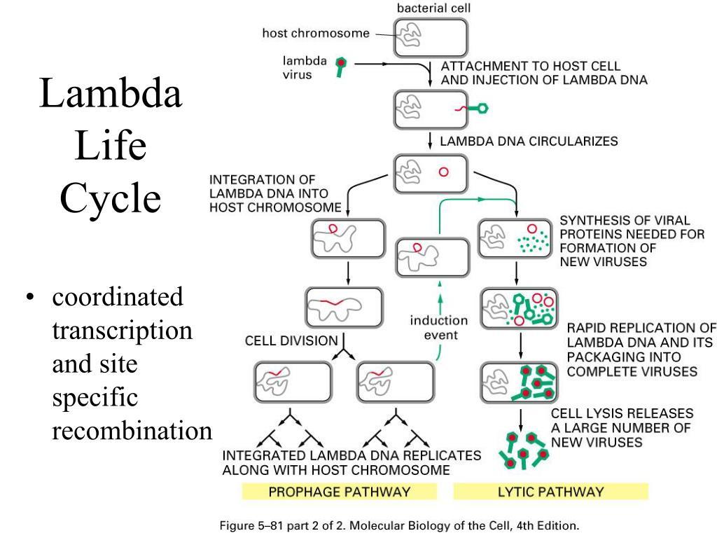 Lambda Life Cycle