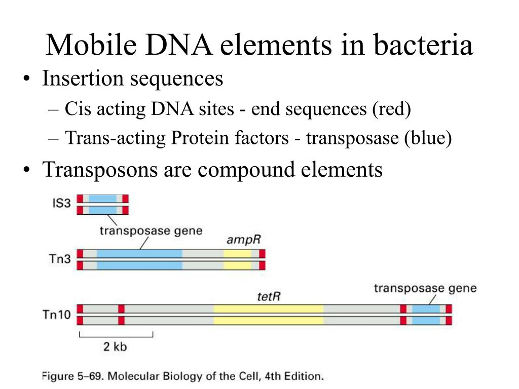 Mobile DNA elements in bacteria