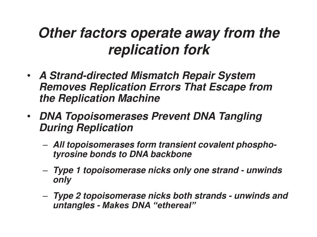 Other factors operate away from the replication fork