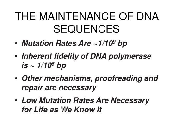 The maintenance of dna sequences l.jpg