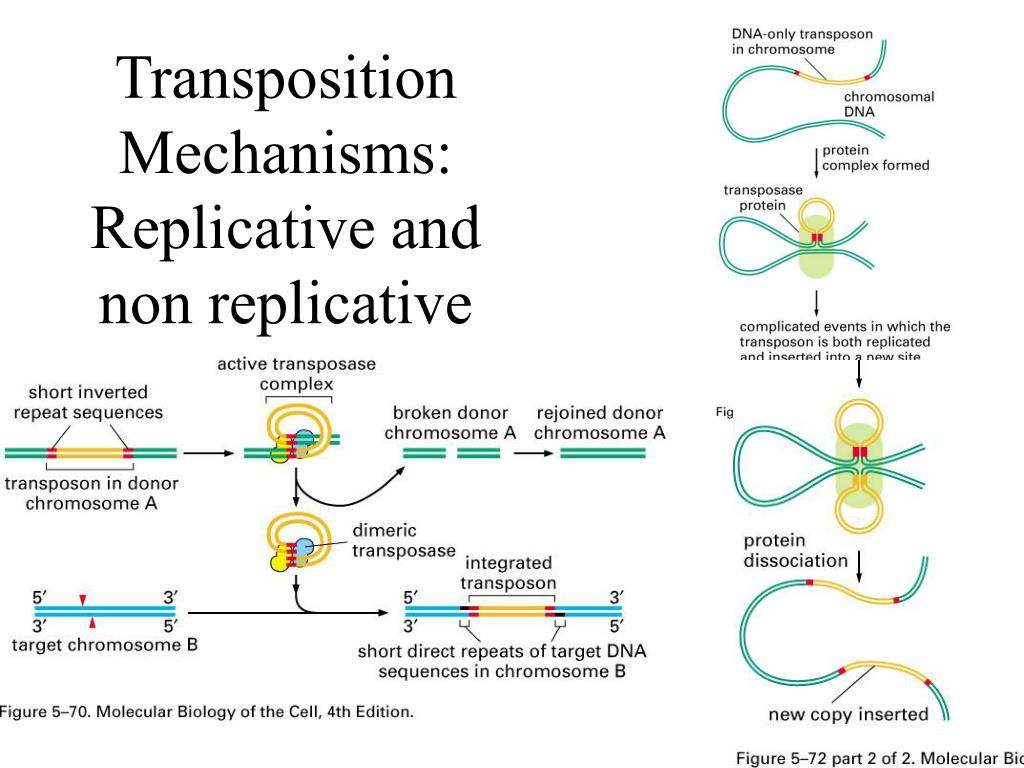 Transposition Mechanisms: