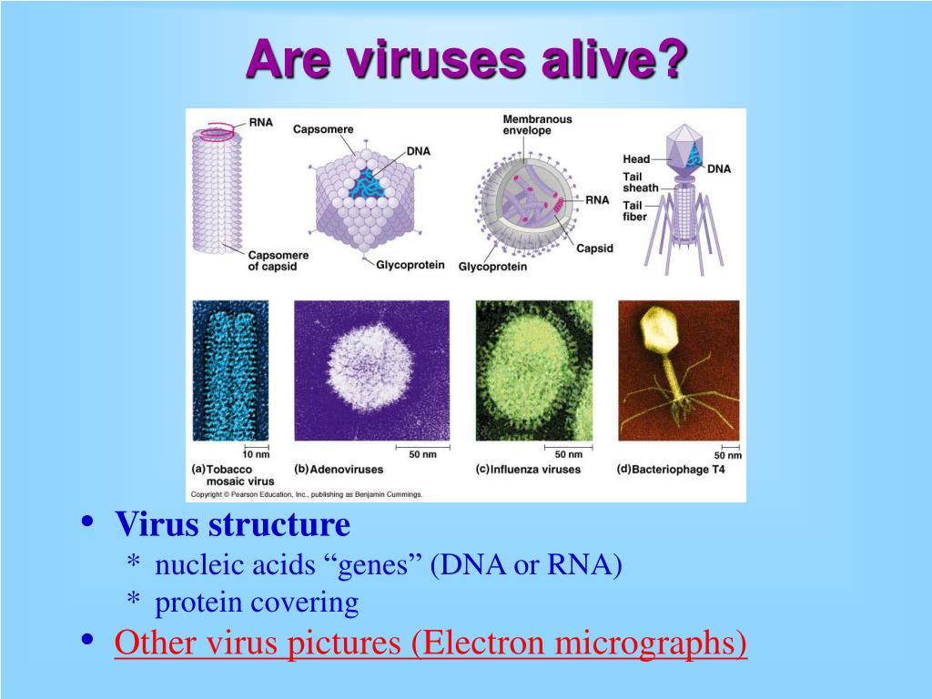 is viruses dead or alive I was wondering because when medical professionals talk about the h1n1 vaccine, they refer to it as a dead virus i thought viruses were not really living things.