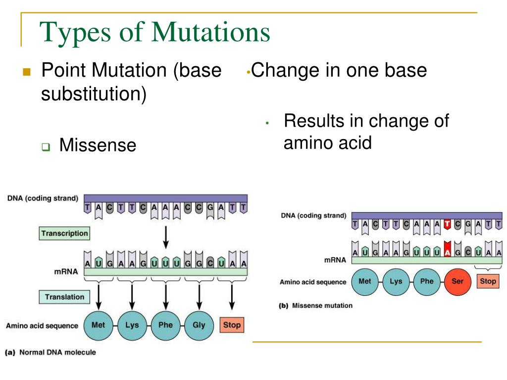 Point Mutation And Natural Selection