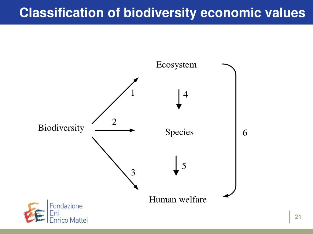 Classification of biodiversity economic values