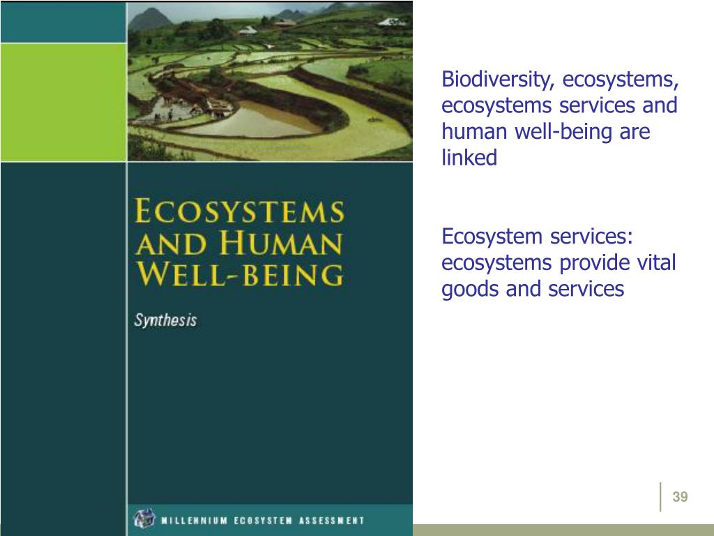 Biodiversity, ecosystems, ecosystems services and human well-being are linked