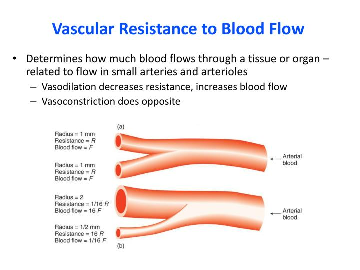 exercise on arterial pressure and vascular resistance An increase in heart rate, as in exercise and emotional states can bring the map closer to the arithmetic mean of the systolic and diastolic pressures vascular resistance usually decreases proportionately.