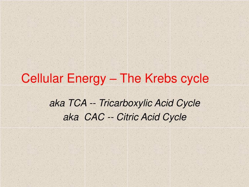 Cellular Energy – The Krebs cycle