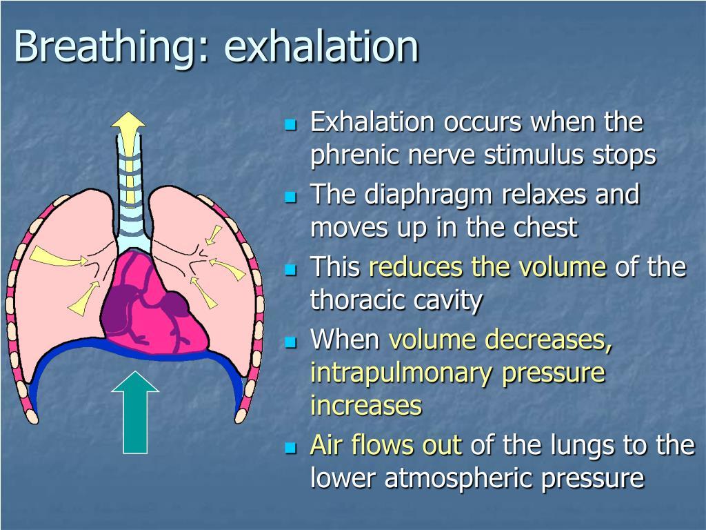 Breathing: exhalation