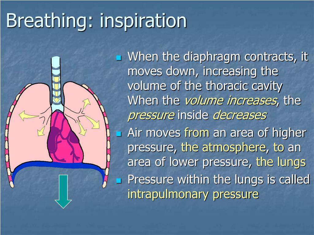 Breathing: inspiration