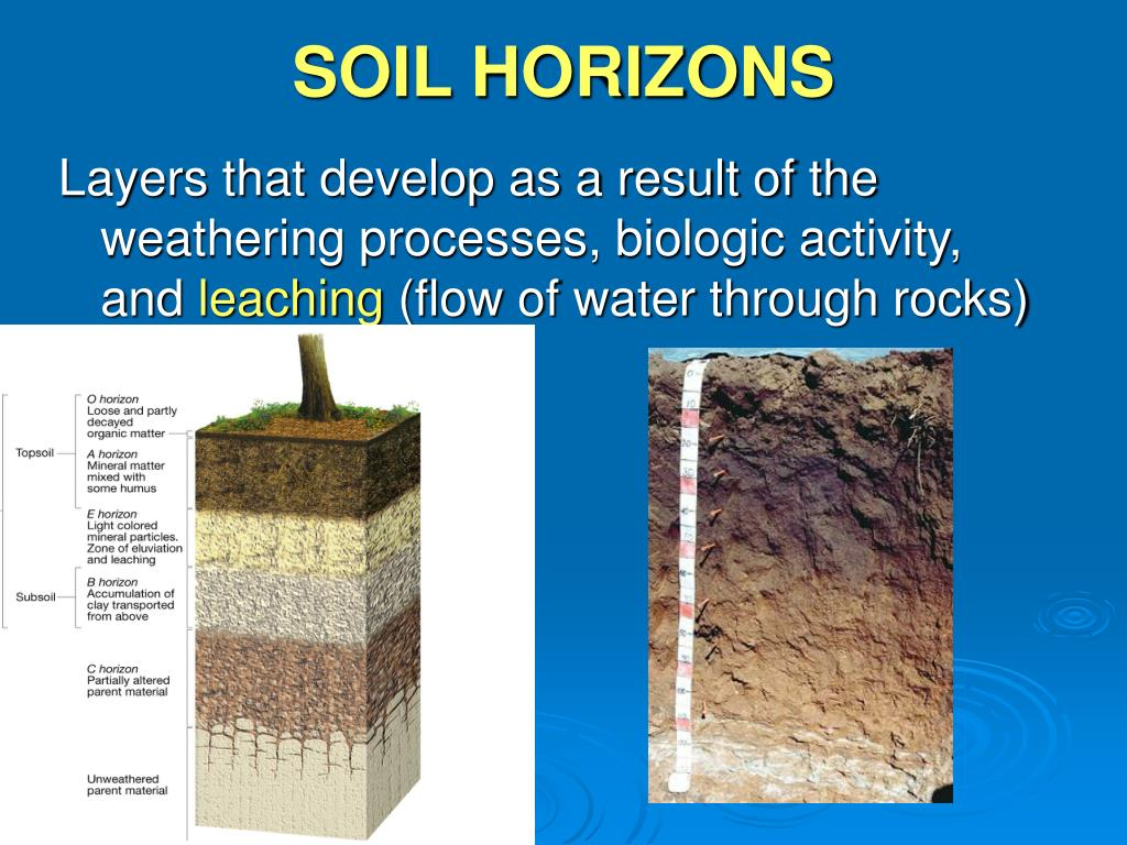 Ppt weathering powerpoint presentation id 314244 for Soil horizons
