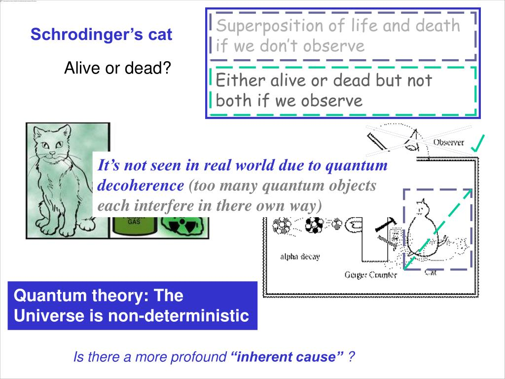 Superposition of life and death if we don't observe