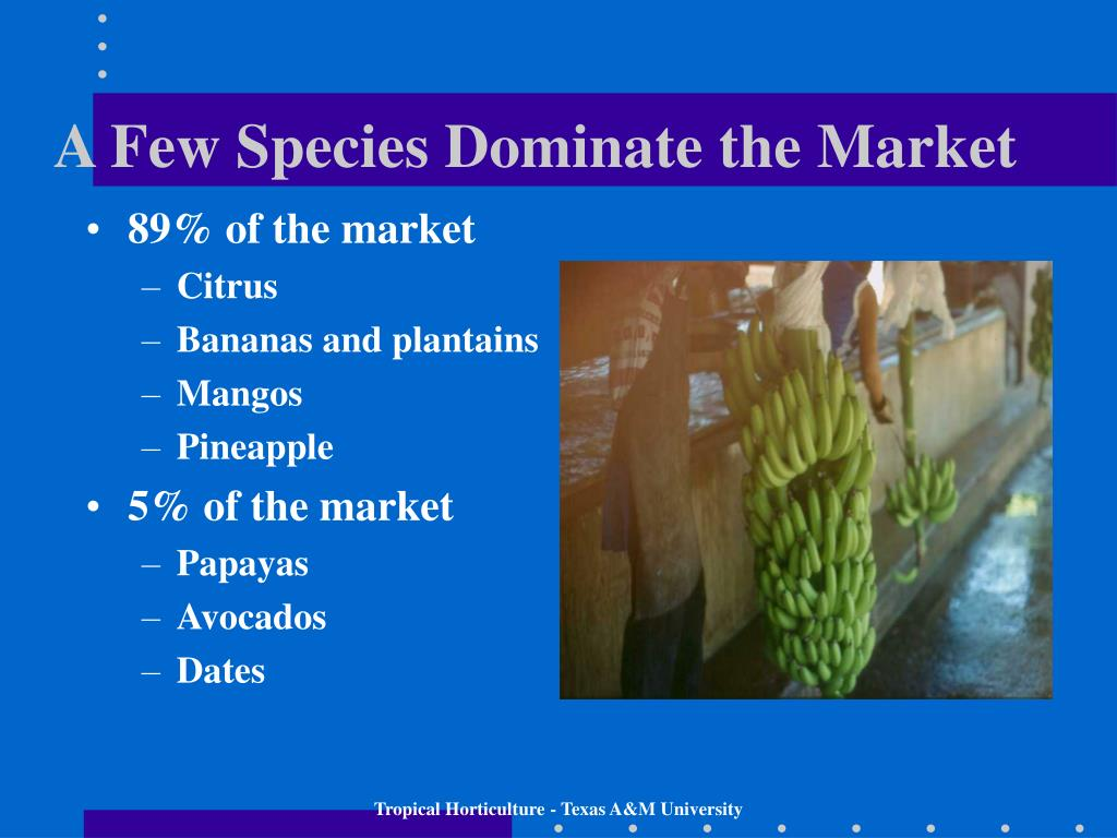 A Few Species Dominate the Market