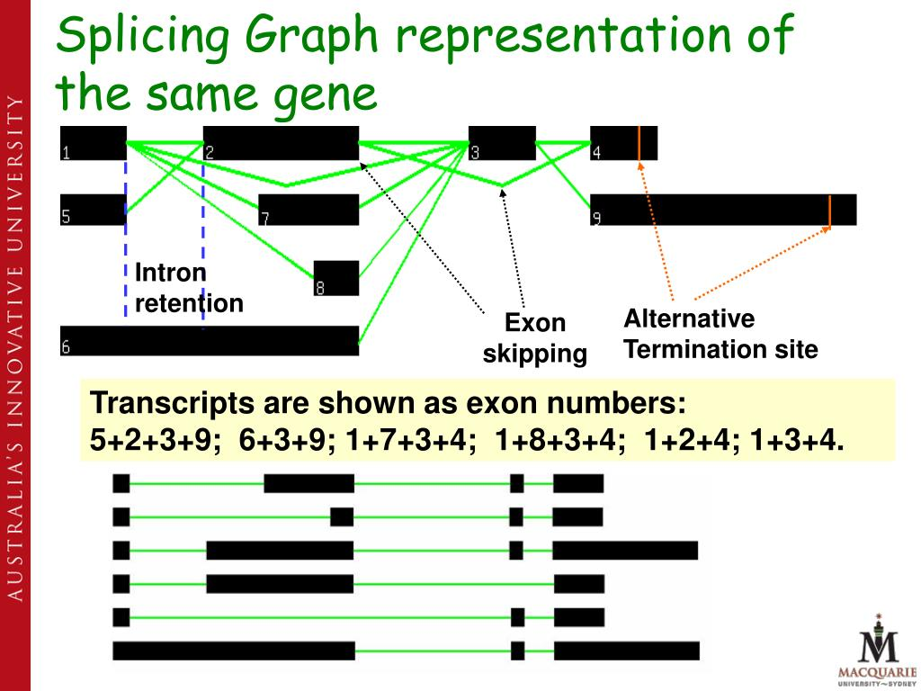 Ppt - Alternative Splicing And Disease  An Overview Powerpoint Presentation