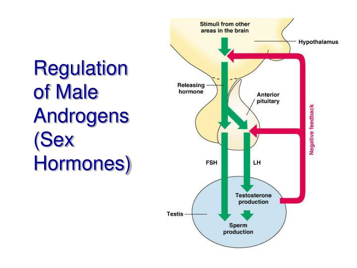 a hormone that regulates male secondary sex characteristics and the production of sperm cells in Gos