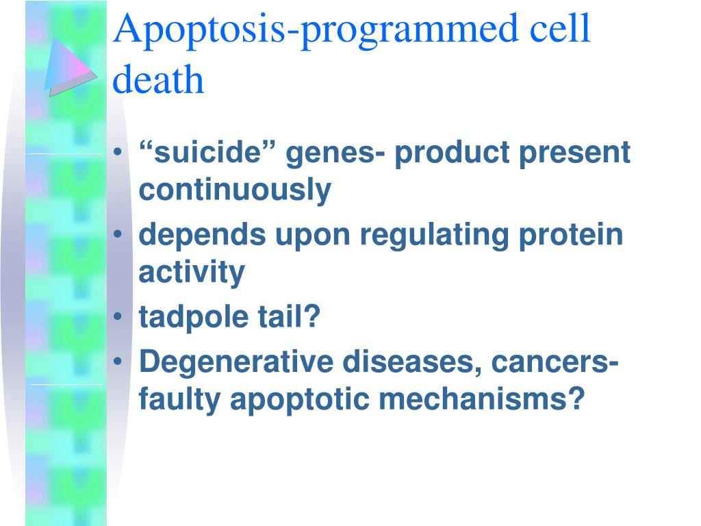 Apoptosis-programmed cell death