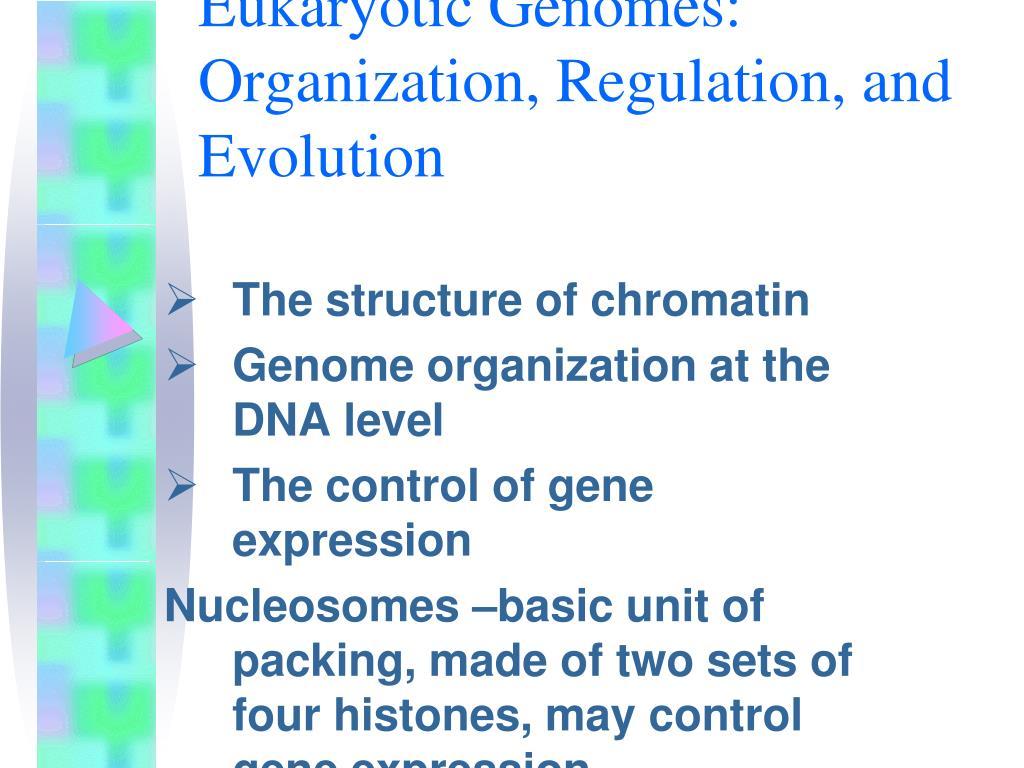 Eukaryotic Genomes: