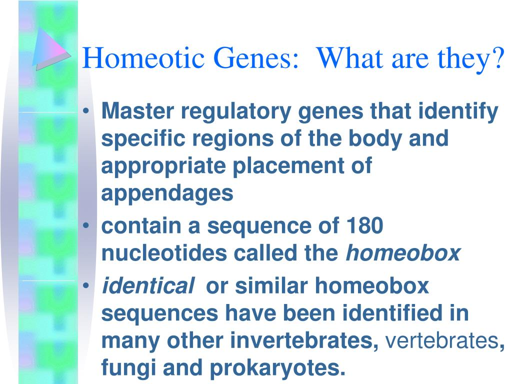 Homeotic Genes:  What are they?