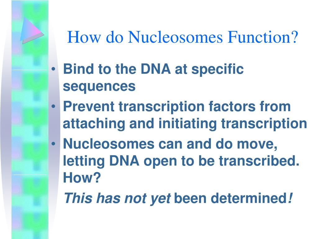 How do Nucleosomes Function?