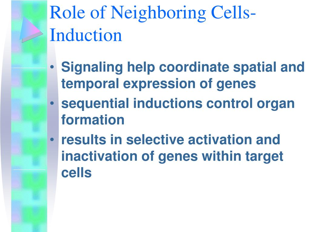 Role of Neighboring Cells-Induction