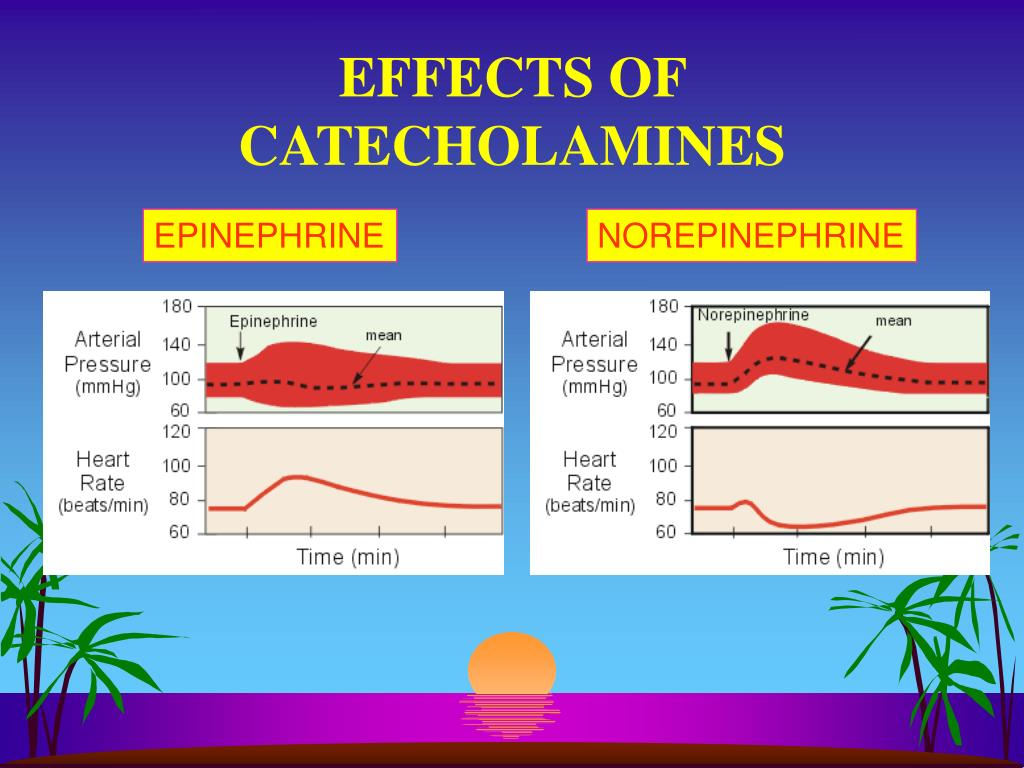 """the effects of catecholamines on the The catecholamine blood test measures the amount of catecholamines in your body """"catecholamines"""" is an umbrella term for the hormones dopamine, norepinephrine, and epinephrine, which naturally occur in your body."""