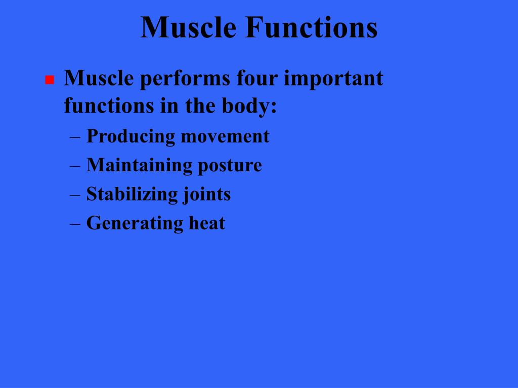 Muscle Functions