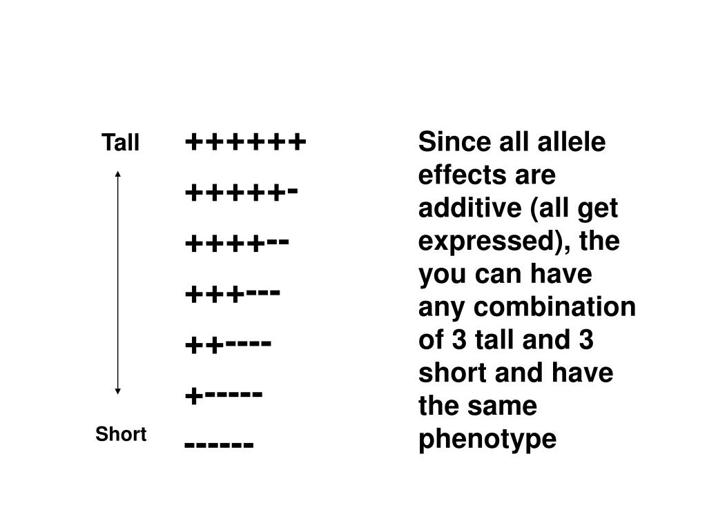 Since all allele effects are additive (all get expressed), the you can have any combination of 3 tall and 3 short and have the same phenotype