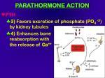 parathormone action86