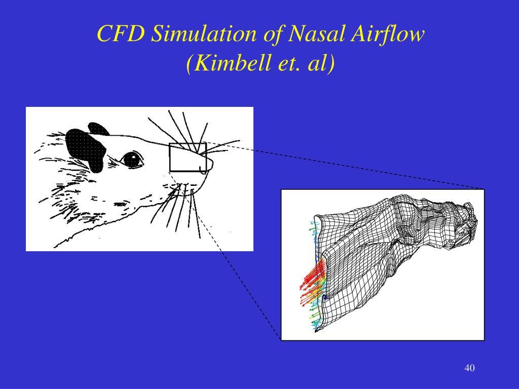 CFD Simulation of Nasal Airflow