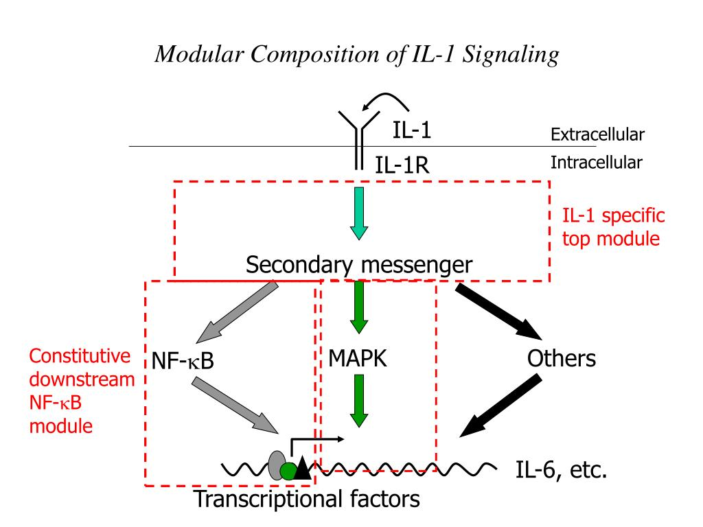Modular Composition of IL-1 Signaling