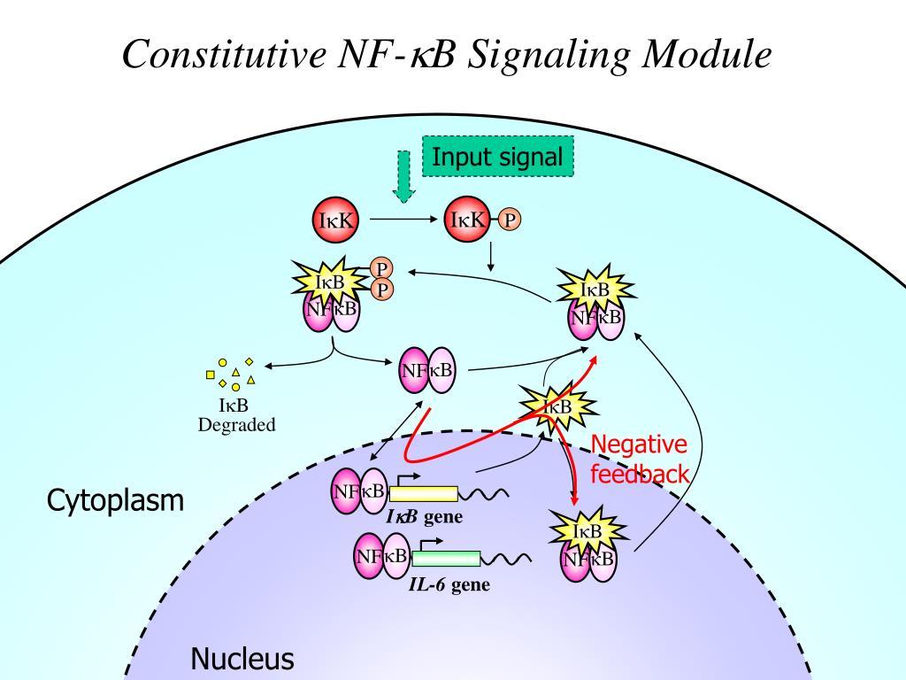 Constitutive NF-