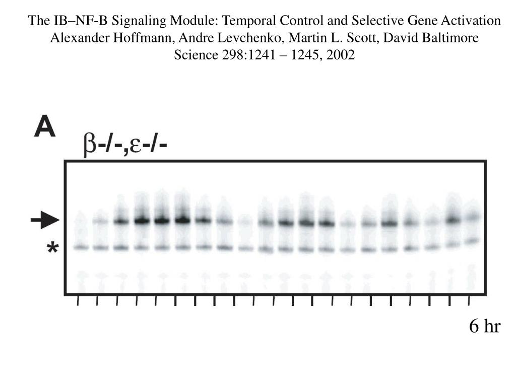 The IB–NF-B Signaling Module: Temporal Control and Selective Gene Activation